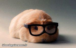 Cochon dinde boule de poil - Idees originales deguisement costume et cosplay pour animaux rongeurs